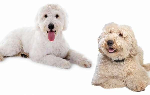 Top Ten Tips for Dog Boarding