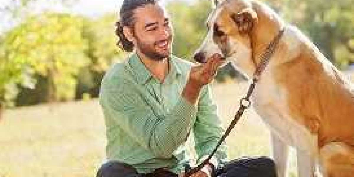 Pet Friendly Treatment Centers – Just Enhance Your Knowledge Now!